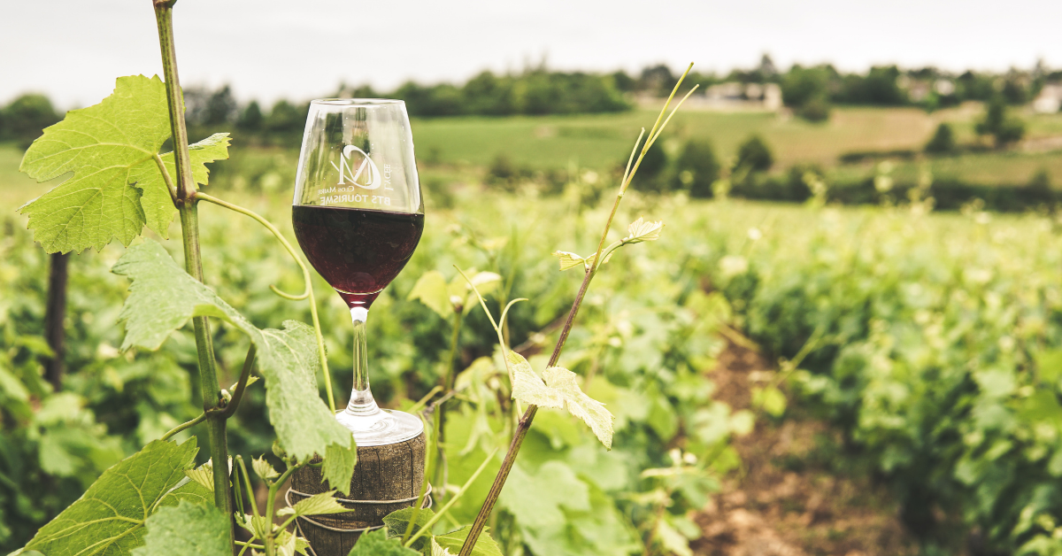 Vineyard with red wine glass